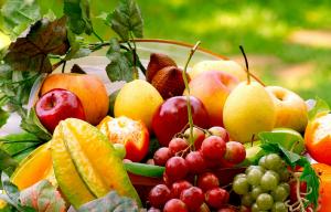 suplier buah segar